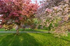 Bäume mit bunten Blüten im Frühjahr Stockbild