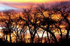 Bäume silhouettieren am Sonnenuntergang Stockfotos