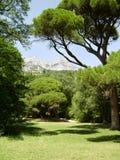 Bäume und Rasen an einem hellen Sommertag Lizenzfreie Stockfotos