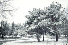 Bäume und Schnee Stockbild