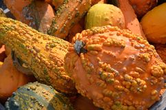 Warty Gourds. Bump covered warty gourds in bright colors for autumn decoration for sale at the outdoor farm market stock photo