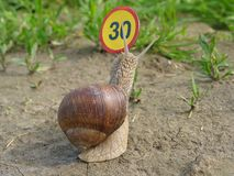 Bumped into speed limit. Teaching snail about speed Stock Images