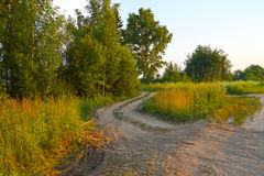 Bumpy country road leading into the forest Stock Photography