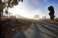 Bumpy foggy country road in the morning Stock Photo
