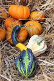 Bumpy gourd Royalty Free Stock Photography