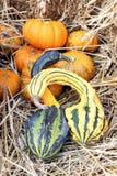Bumpy gourd Stock Photos