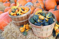 Bumpy gourd Royalty Free Stock Images