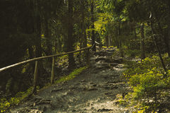 Bumpy path full of roots. In mystical forest Stock Images