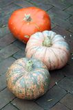 Bumpy pumpkin Royalty Free Stock Photos