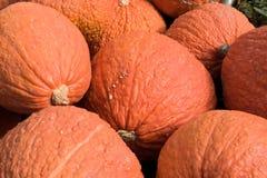 Bumpy Pumpkins Stock Photos