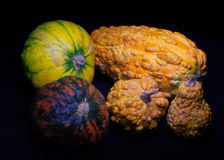 Bumpy pumpkins in the dark. Five bumpy and lumpy orange and green decorative pumpkins in the dark Royalty Free Stock Photo