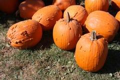 Bumpy Pumpkins Stock Images