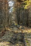 Bumpy road with puddles in Forest. Bumpy road with puddles goes through spring forest. Vertical background photo stock image