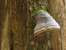 A bumpy sponge called Trouncatex. Stock Photo