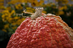 Bumpy, Warty Pumpkin Stock Photo