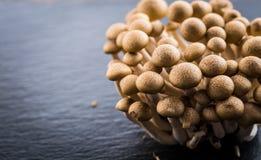 Buna Shimeji - edible mushroom from East Asia stock images