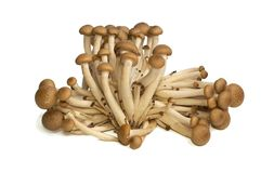 Buna Shimeji mushrooms Stock Photo