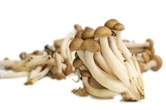 Buna Shimeji mushrooms Stock Images