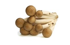 Buna Shimeji mushrooms Royalty Free Stock Photography