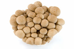 Buna Shimeji mushrooms. Stock Photos