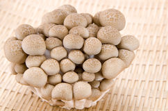 Buna Shimeji mushrooms. Royalty Free Stock Photo