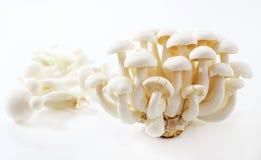 Pilz-Spezies in Japan. Lizenzfreie Stockfotografie