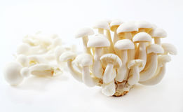 Mushroom species in Japan. Royalty Free Stock Photography