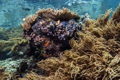 Bunaken medborgare Marine Park. Indonesien Royaltyfri Fotografi