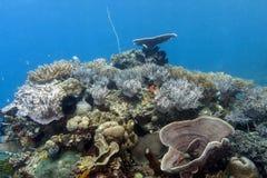 Bunaken medborgare Marine Park. Indonesien Arkivfoton