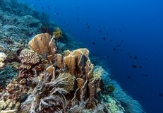 Bunaken National Marine Park.Indonesia Stock Images