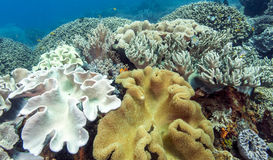 Bunaken National Marine Park.Indonesia Stock Photos