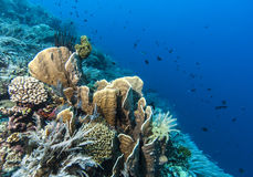 Bunaken National Marine Park.Indonesia Royalty Free Stock Photography