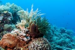 Bunaken Nationale Marine Park. Indonesië stock foto
