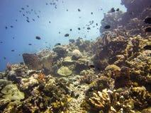 Bunaken reef Royalty Free Stock Image