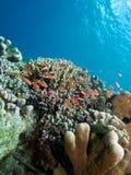 Bunaken Reefscape Stock Images
