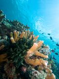 Bunaken Reefscape Royalty Free Stock Photo