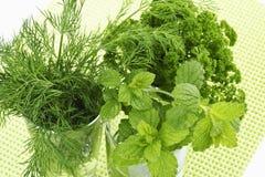 Bunces da salsa, do aneto e do erva-cidreira Imagens de Stock