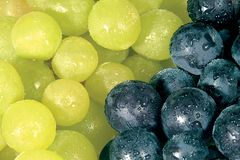 Bunch. Grape stock photos