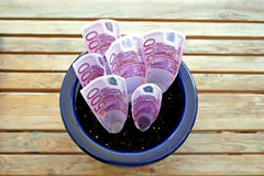 Bunch of 500 Euro notes growing in a pot Royalty Free Stock Images