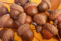 Bunch of acorns Stock Photography