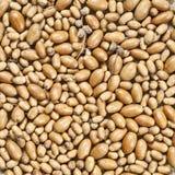 Bunch of acorns Stock Images