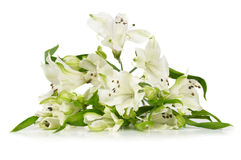 Bunch of alstroemeria Stock Photography