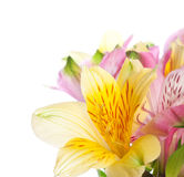 Bunch of alstroemeria flowers Stock Images