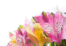 Bunch of alstroemeria flowers Stock Image
