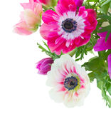 Bunch of anemone flowers Royalty Free Stock Photography