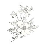 Bunch of anemones and buttercups, isolated. Bunch of anemones and buttercups, hand drawn Stock Images