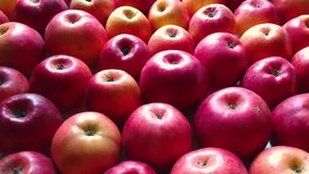Apples background camera moving diagonally stock video