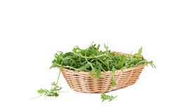 Bunch of arugula in basket. Royalty Free Stock Photography