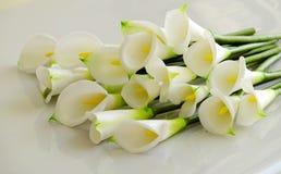 Arum lily on white Royalty Free Stock Photo