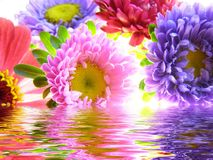 Bunch of asters reflected in water Stock Photography